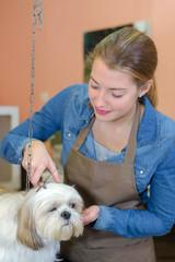 cutting the dog's coat