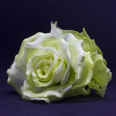 Yellow rose isolated on a black background. Artificial silk flowers
