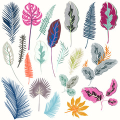 Collection of tropical colorful leafs for design