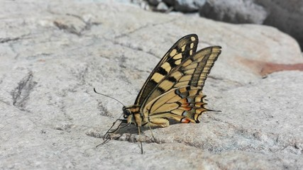 Little butterfly detail