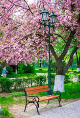 beautiful sakura blossom in the park. wooden bench and green lantern under the branches of tree