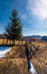spruce tree near the fence in mountains. beautiful springtime scenery with melting snow on weathered grass
