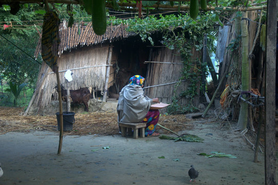 Dhaka, Bangladesh, 11 March 2018: An image of a rural house wife working in the yard of her house in a rural area of Bangladesh.