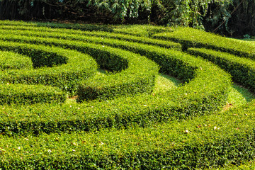 Labyrinth of bushes with green fresh foliage in the park on a bright sunny day