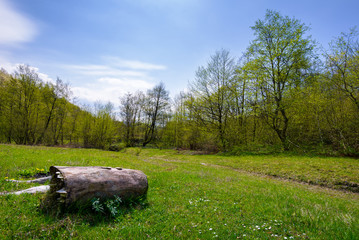 log on the grassy meadow among the forest. beautiful nature scenery in springtime