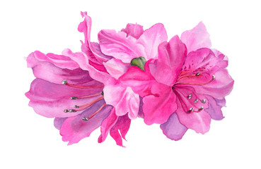 Watercolor flowers. Bright pink azaleas.