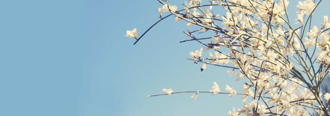 Image of beautiful white flowers and blue sky.