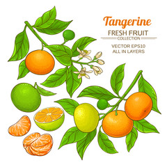 tangerine fruit vector set