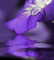 blue flower with a dew drop