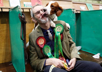Doreen the Irish Red and White Setter licks owner Graham Bayne during the final day of the Crufts Dog Show in Birmingham