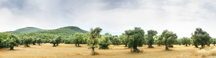 Panoramic view of Olive Farm.