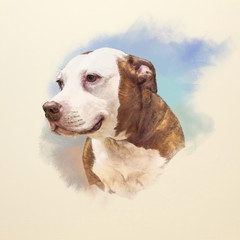 Watercolor Portrait of American Staffordshire Terrier, a medium-sized, short-coated dog breed. Animal Art collection: Dogs. Hand Painted Illustration of Pets. Good for banner, print T-shirt, card