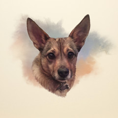 Portrait of a mini Corgi Dog. Cute puppy on the watercolor background. Watercolor Animal Art collection: Dogs. Dog Pug Portrait - Hand Painted Illustration of Pet. Good for banner, T-shirt, card.