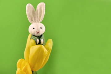 Easter Bunny with tulips stock images. Yellow tulips with Easter bunny. Easter decoration on a green background. Spring decoration images