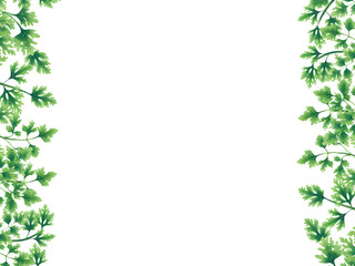 Green parsley leaves at the borders of the illustration on the left and right. Inside an empty white background.