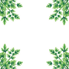 Green parsley leaves at the borders of the illustration. Bouquets in the corners. Inside an empty white background. Decoration.