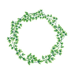 Illustration. Wreath of parsley leaves isolated on white background. Decoration for the logo.