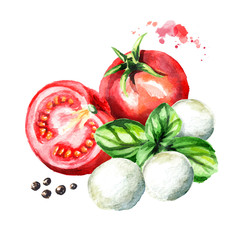 Mozzarella cheese, Basil, tomatoes. Watercolor hand drawn illustration, isolated on white background
