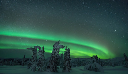 Aurora arcing over snow covered trees