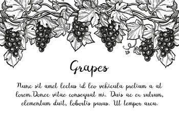 Ink sketch of grapes.