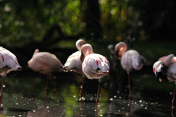 a group of flamingos in water with beautiful pink feathers plumage