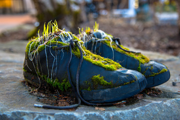 Moss Covered Sneakers