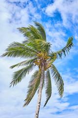 Palm on blue sky