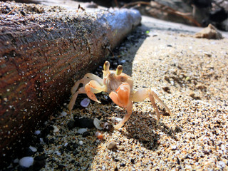 Cute sand crab on beach