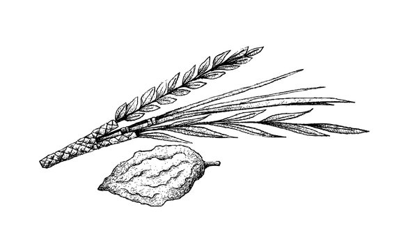 Hand Drawn of Lulav and Etrog on White Background