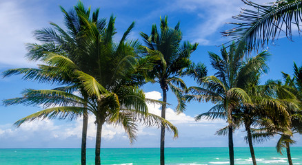 Tropical Miami Beach Palms