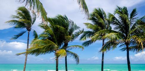 Tropical Miami Beach Palms