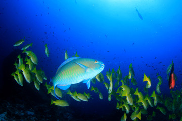 Fish on coral reef underwater
