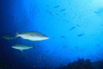 Fish on coral reef underwater