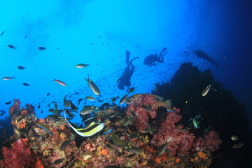 Scuba divers explore coral reef and fish