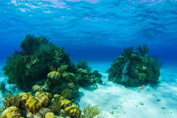 Beautiful coral structures that thrive in the warm tropical waters are home to an abundance of marine life. The perfect combination of the surrounding environment make the ecosystem blossom