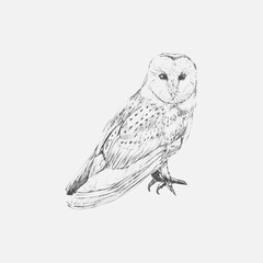 Hand drawn owl isolated on background