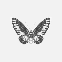 Hand drawn butterfly isolated on background