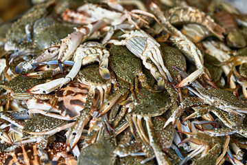 Lot of crabs on market