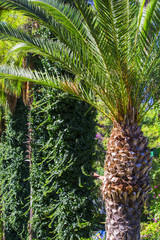 Date palm on the mall