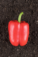 red bell pepper on the soil background
