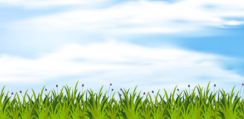 Background scene with green field at daytime