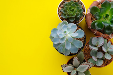 Succulent plants on yellow paper background with copy space