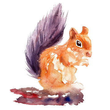 Cute watercolor squirrel sitting isolated on white background, kid wild forest animal painting hand drawn illustration, decorative design education for children, preschool, zoo alphabet, greeting card