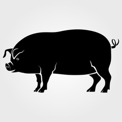 Pig icon isolated on white background.