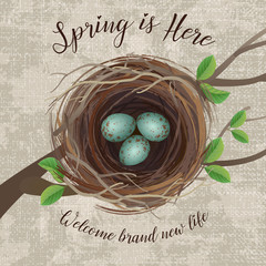 Vector illustration of bird's nest with blue speckled eggs. A message for arrival of Spring or Easter. Top View.