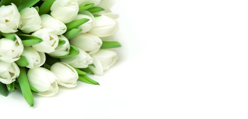 Spring background with Bouquet white tulips flower