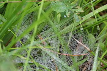cobweb dew drop of water