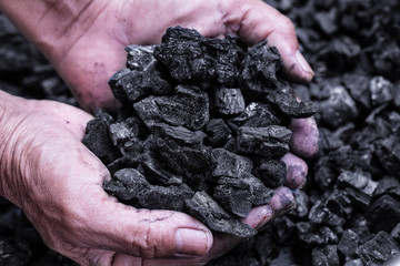 Coal mining - Man hand holding natural black charcoal for background. Picture idea about coal mining, coal processing, energy source, environment protection. Industrial coals. Forest conservation