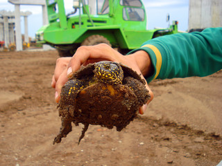 Small turtle in man hand
