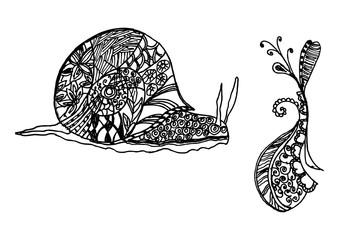 Hand Drawn Snail